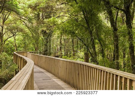 Canopy Walkway, 14 Metres Above The Forest Floor, In The Ah Reed Memorial Park, Whangarei.