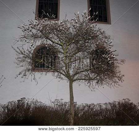 Tree In Front Of Historic Church By Night