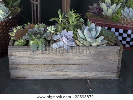 Succulents In Old Wooden Box For Sale.