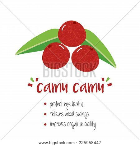 Benefits Of Camu Camu Fruit, Trendy Superfood With Doodle, Hand Drawn Illustration Isolated On White