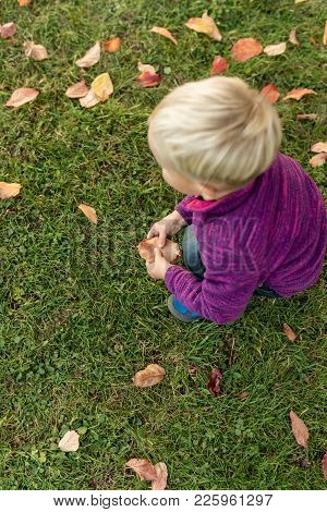 Little Blond Boy Playing On Green Grass Picking Up Fallen Autumn Leaves In A View From Above With Co
