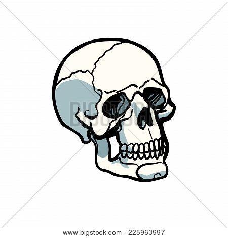 Human Skull Isolated On White Background. Comic Book Cartoon Pop Art Retro Illustration Vector