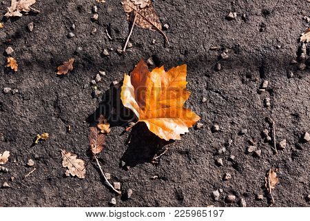 A Colorful Leaf Has Fallen To The Ground In Autumn At A University Campus. The Ground Is Rough And T