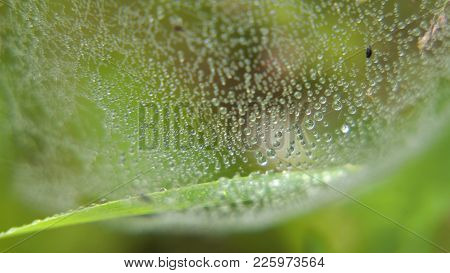 Drop Of Dew In Morning On Leaf With Sun Light. Water Drops On The Green Grass. Water Drops On Fresh