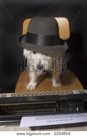 Canine Creation