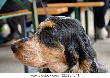 Close-up Of A Side Dog Portrait - Faithful Friend