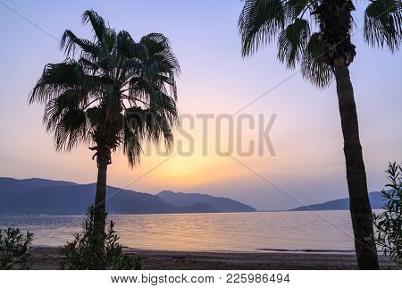 Palm Tree Silhouettes During Sunrise In Marmaris, Turkey
