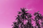 Coco palm tree tropical landscape. Palm skyscape pink toned photo. Exotic island vacation banner template with text place. Palm tree and blue sky background. Tropic greenery. Palm leaf backdrop poster