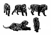Five Silhouettes Of Tigers vector illustration. Possible to change size and colours as your wishes... poster