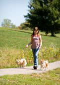 Preteen girl walking her two Pomeranian puppies. poster