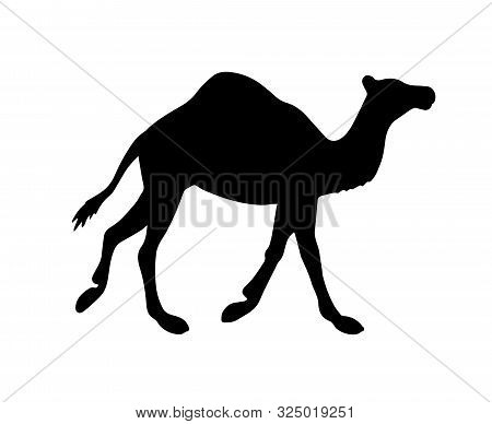 Vector Black Flat Dromedary One-humped Camel Silhouette Isolated On White Background