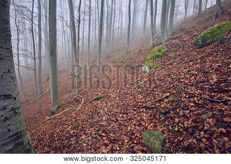 Foggy forest in the autumn