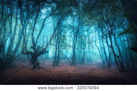Beautiful Mystical Forest In Blue Fog In Autumn. Colorful Landscape With Enchanted Trees With Orange