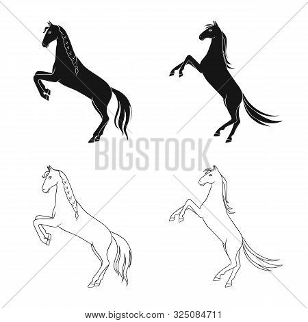 Isolated Object Of Breed And Equestrian Logo. Set Of Breed And Mare Stock Symbol For Web.