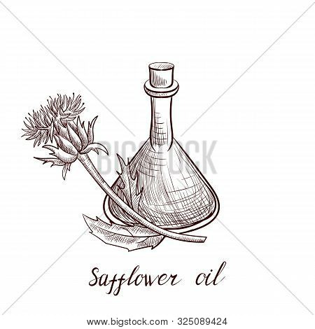 Vector Drawing Safflower Oil, Bottle Of Vegetable Oil And Plant, Hand Drawn Illustration