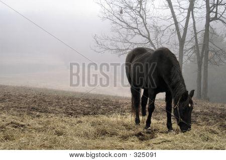 Foggy Morning Feed