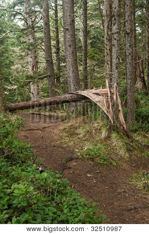 forest trail with wind downed tree blocking way poster