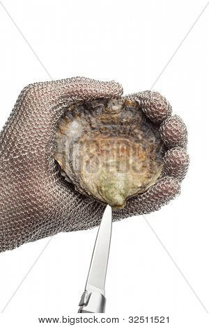 Opening a flat oyster with a knife and protection glove on white background poster