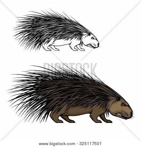 Porcupine Or Hedgehog Animal Vector Mascot. Wild Forest Mammal With Sharp Spines Or Quills, Brown Fu