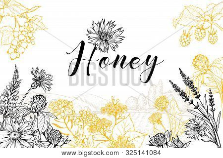 Flower Honey Vector Hand Drawn Banner Template. Natural Homemade Product Poster Layout With Letterin