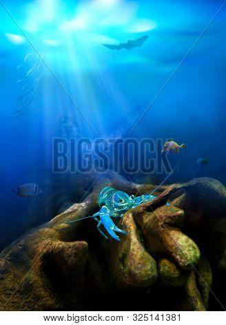 Underwater view. Crayfish in nature habitat.