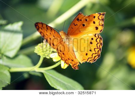 Butterfly With Broken Wing