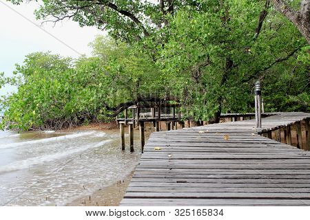 Scenic Of Wood Walkway Into Mangrove Forest For Natural Learning
