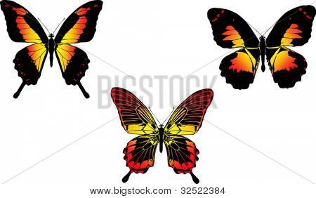 illustration with three red and yellow butterflies