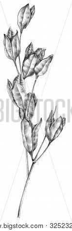 Botanical sketch of wilted flowers herbarium. Drawing by ballpoint pen. poster