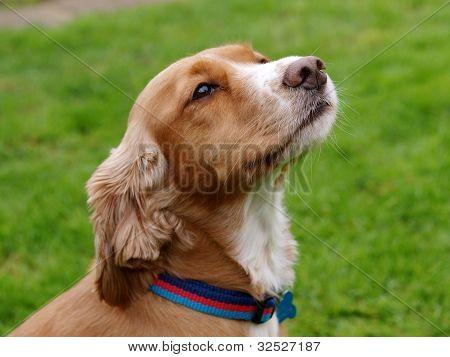 Cute Puppy In Collar