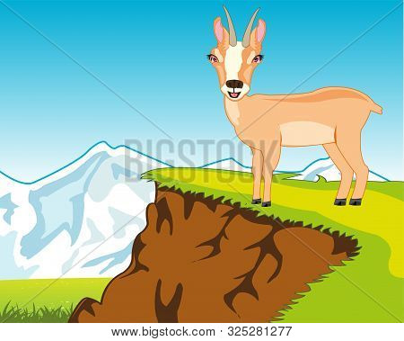 Wildlife Chamois On Background Of The Nature