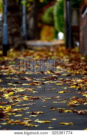 Yellow Leaves On A Walking Path In Early Autumn
