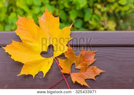 Autumn Red And Orange Leaf With Heart. Fall Love.hello October, November. Autumn Atmosphere Backgrou