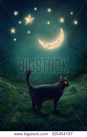 Black cat in the mystic night