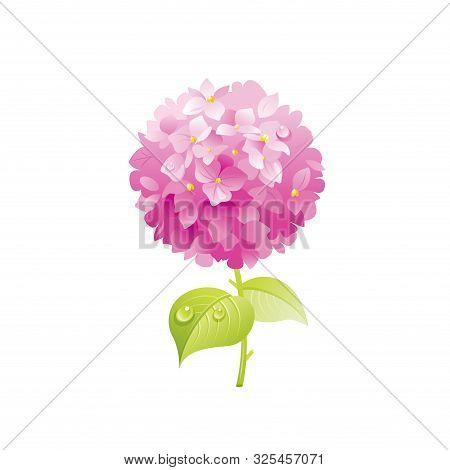 Hydrangea Flower, Floral Icon. Realistic Cartoon Cute Plant Blossom, Spring, Summer Garden Symbol. V