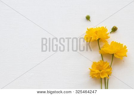 colorful mellow yellow flowers cosmos local flora of asia arrangement flat lay postcard style on background white poster
