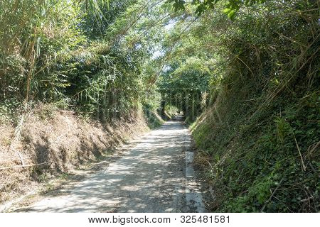 The Green Way Of The Carrilet Path Of Olot