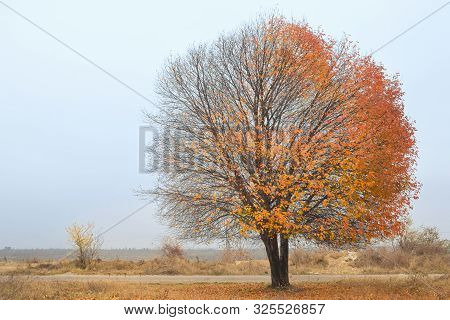 Solitary Single Tree In The Autumn Landscape