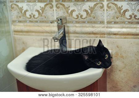 Domestic Cat Is Lying In A Water Sink