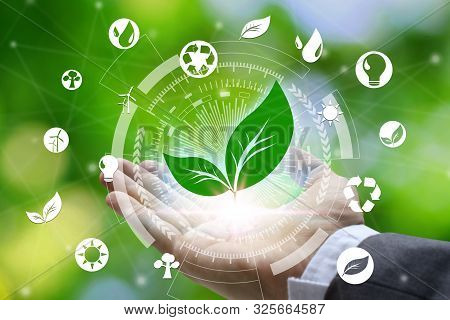 Hand Holding With Leaf And Environment Icons Over The Network Connection On Nature Background, Techn