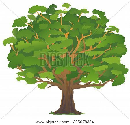 One Wide Massive Old Oak Tree With Green Leaves Isolated Illustration, Majestic Oak With A Rough Tru