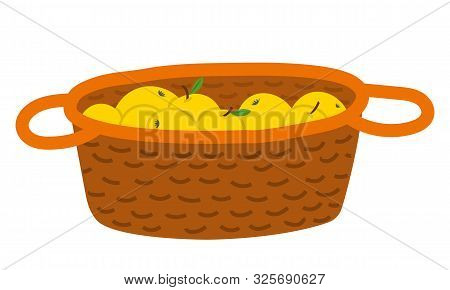 Wicker Basket With Yellow Apples With Leaves, Picking Fruit In Wooden Pottle. Sweet Product, Fresh N