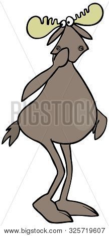 Illustration Of A Very Bashful Bull Moose Holding Its Hoof Against His Face.