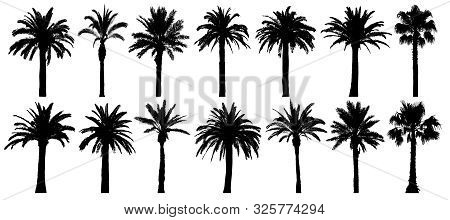 Palm Trees Silhouette. Vector Set Tropical Trees. Isolated On White Background