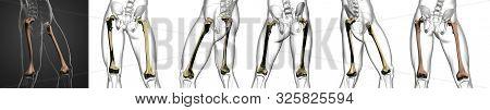 3d Rendering Medical Illustration Of The Femur Bone Collection