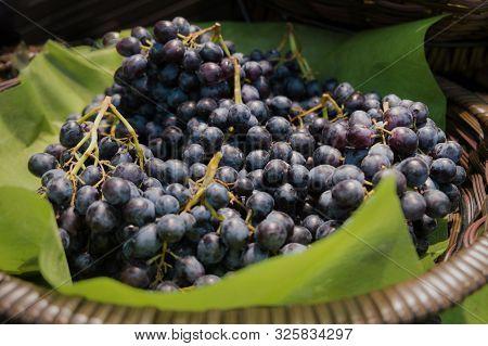 A Pile Of Fresh Organic Ripe Sweet Juicy Black Seedless Grapes In The Wicker Basket.