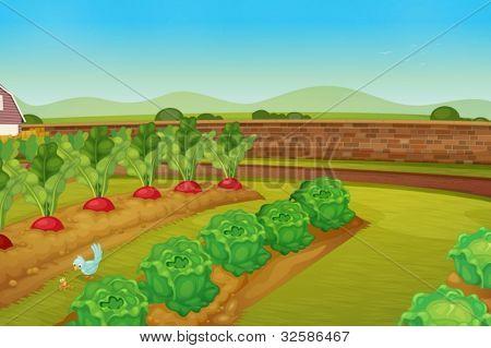 illustration of a vegie patch