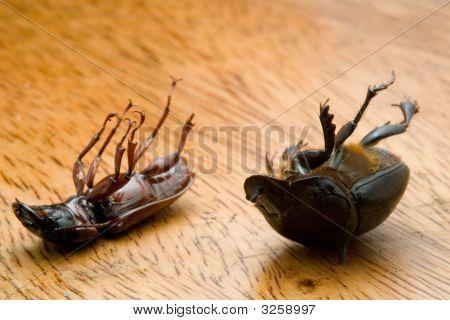 Dead Bugs