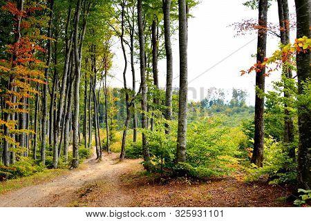 Road To The Winter And Spa Station Poiana Brasov, Transylvania, Romania, In Autumn
