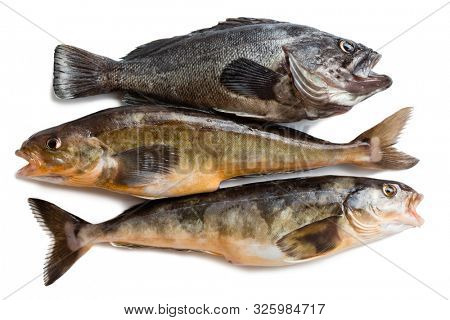 Freshly caught sea fishes Hildendorf bass and Arabesque greenling bass, is found in the seas of the Far East. Isolation on a white background.